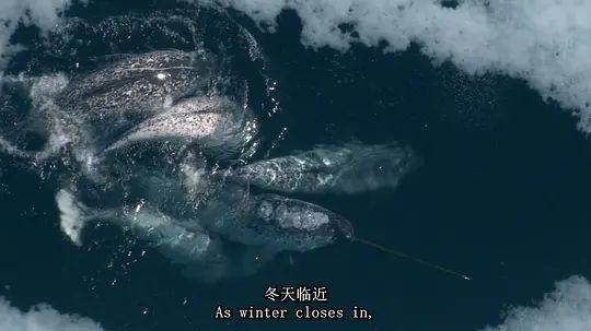 海洋巨兽 第一季的剧照