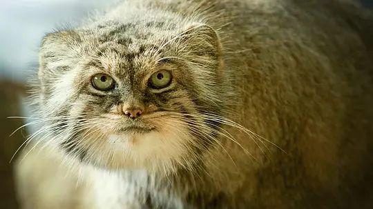 大猫 第一季的剧照