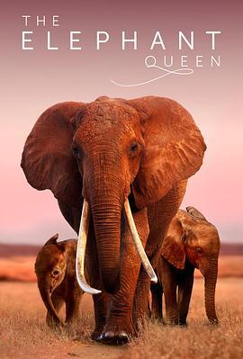 大象女王的海报